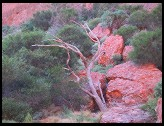 Digital photo titled olgas-tree