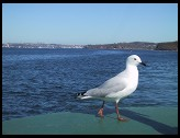 Digital photo titled ferry-bird