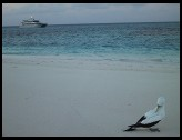 Digital photo titled sand-cay-bird-boat