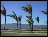 Digital photo titled townsville-palms