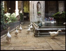 Digital photo titled geese-in-cloister
