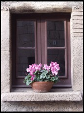 Digital photo titled poble-espanyol-flower-in-window