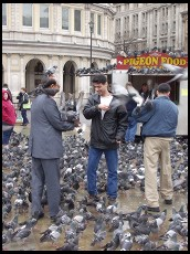 Digital photo titled trafalgar-tourists-and-pigeons-vertical