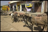 Digital photo titled donkeys-in-front-of-agra-storefronts