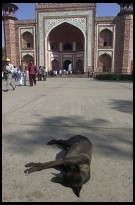 Digital photo titled sleeping-dog-at-taj-mahal-gate