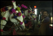 Digital photo titled village-wedding-horses