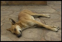 Digital photo titled qutb-stray-dog