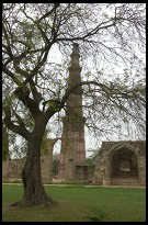 Digital photo titled qutb-tower-through-tree