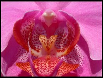 Digital photo titled orchid-straight