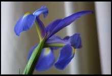 Digital photo titled flowers-125-is