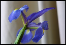 Digital photo titled flowers-60-is