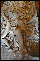 Digital photo titled mammoth-tusks