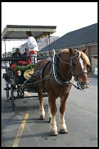 Digital photo titled horse-carriage