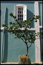 Digital photo titled downtown-tree
