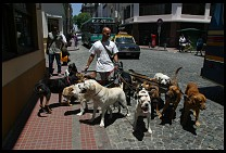 Digital photo titled san-telmo-dogs-2