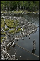Digital photo titled land-of-beavers