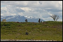 Digital photo titled penguins-13