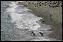 Digital photo titled penguins-17