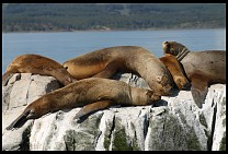 Digital photo titled sea-lions-11