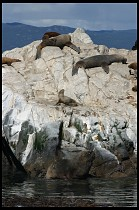 Digital photo titled sea-lions-14