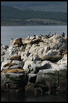 Digital photo titled sea-lions-4