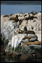 Digital photo titled sea-lions-6