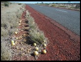 Digital photo titled roadside-vegetation