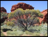 Digital photo titled tree-and-mesa