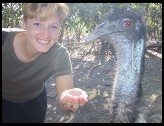 Digital photo titled emu-closeup