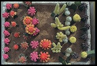 Cacti. Yuting Flower and Bird Market. Beijing.