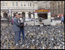 Digital photo titled trafalgar-tourists-and-pigeons-horizontal