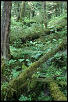 Digital photo titled rainforest-trail