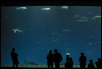 Digital photo titled mb-aquarium