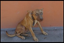 Digital photo titled mulege-dog