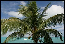 Digital photo titled great-exuma-harbor-tree