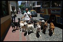Digital photo titled san-telmo-dogs-1