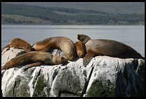 Digital photo titled sea-lions-9