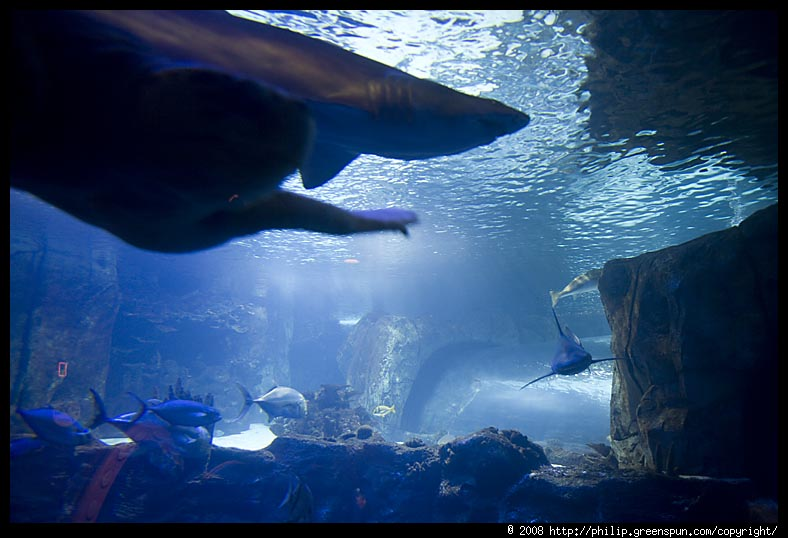 Photograph By Philip Greenspun Newport Kentucky Aquarium 06