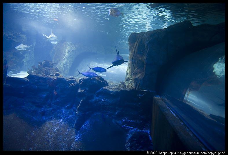 Photograph By Philip Greenspun Newport Kentucky Aquarium 07