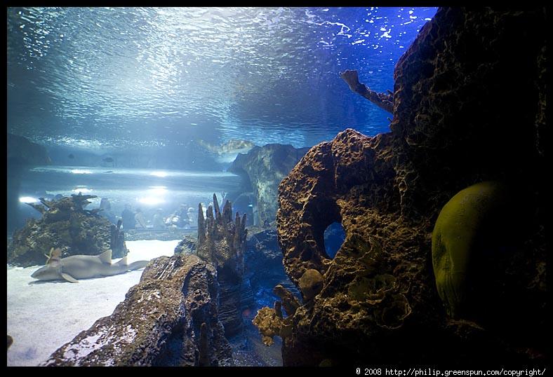 Photograph By Philip Greenspun Newport Kentucky Aquarium 09