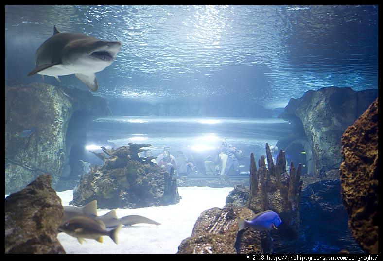 Aquarium Kentucky Newport Aquarium Newport Kentucky
