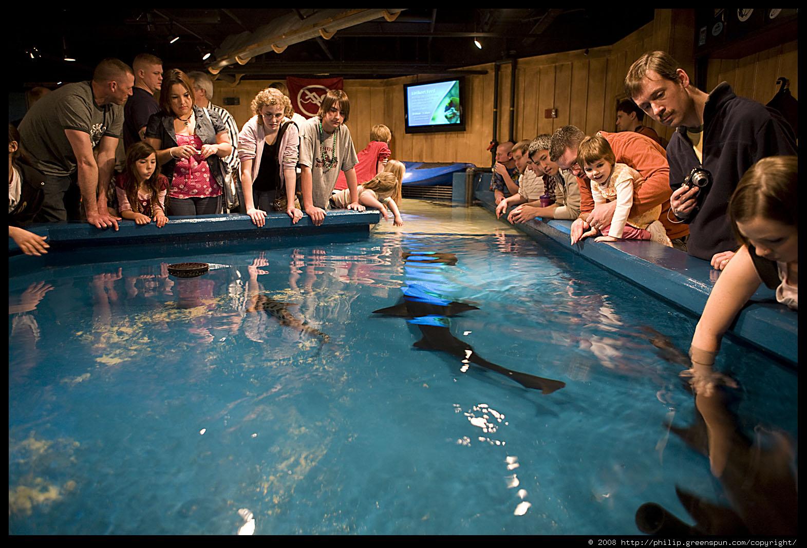 Photograph By Philip Greenspun Newport Kentucky Aquarium 14
