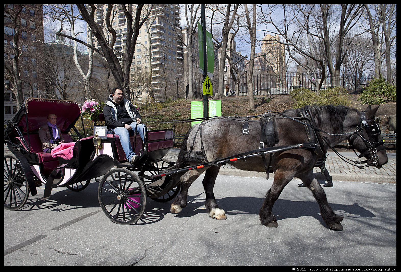 photograph by philip greenspun horse carriage central park. Black Bedroom Furniture Sets. Home Design Ideas