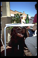 Dog under table.  Santa Fe, New Mexico.