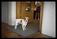 Small Dog.  Santa Fe, New Mexico.