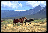 Horses at the Taos Pueblo, New Mexico.