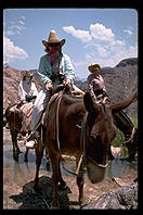 Tourists on mules.  Grand Canyon.  Arizona.