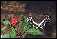 Butterfly World, Pompano Beach, Florida