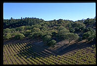 Napa Valley, California.
