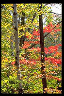 Fall foliage in the Adirondacks (New York).